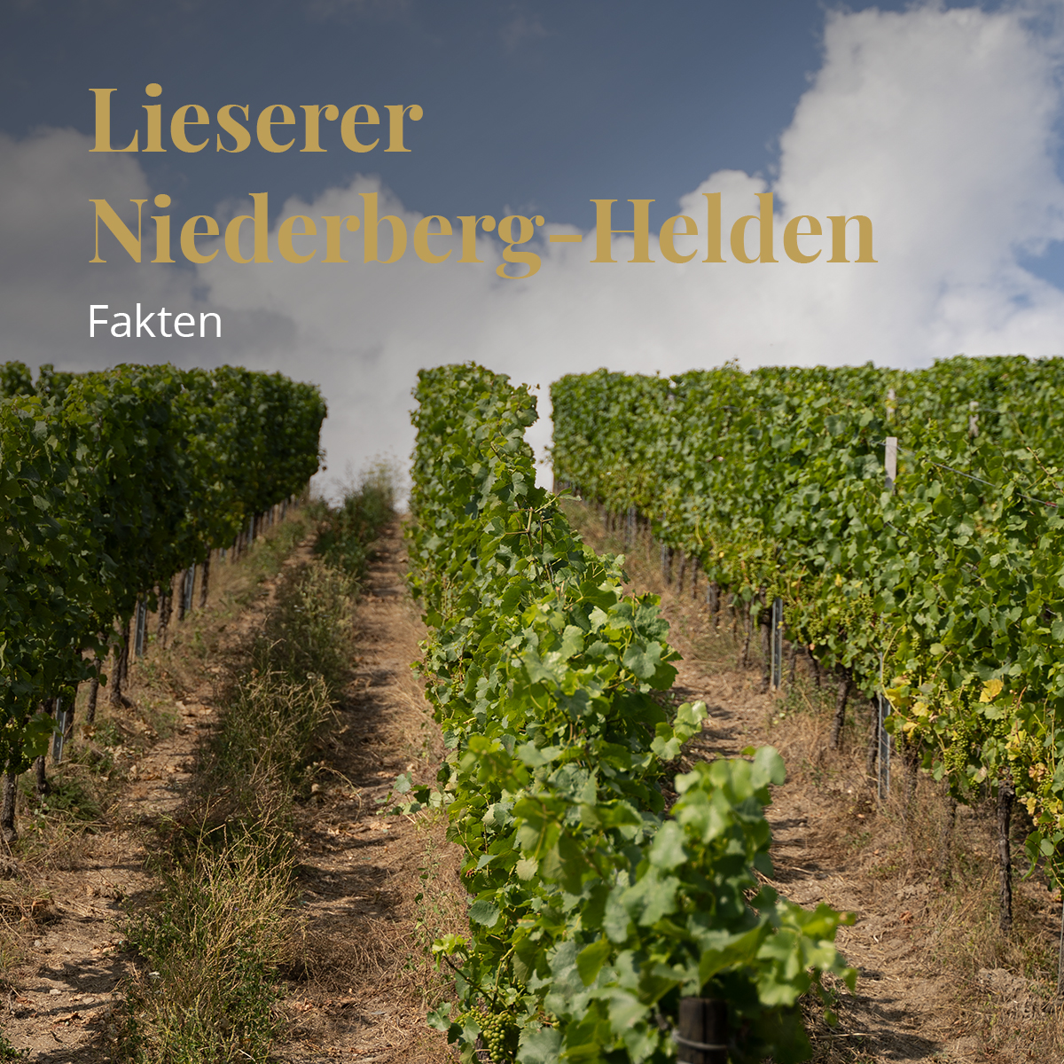 Hubert Botzet - Bioweingut Hubertushof in Lieser