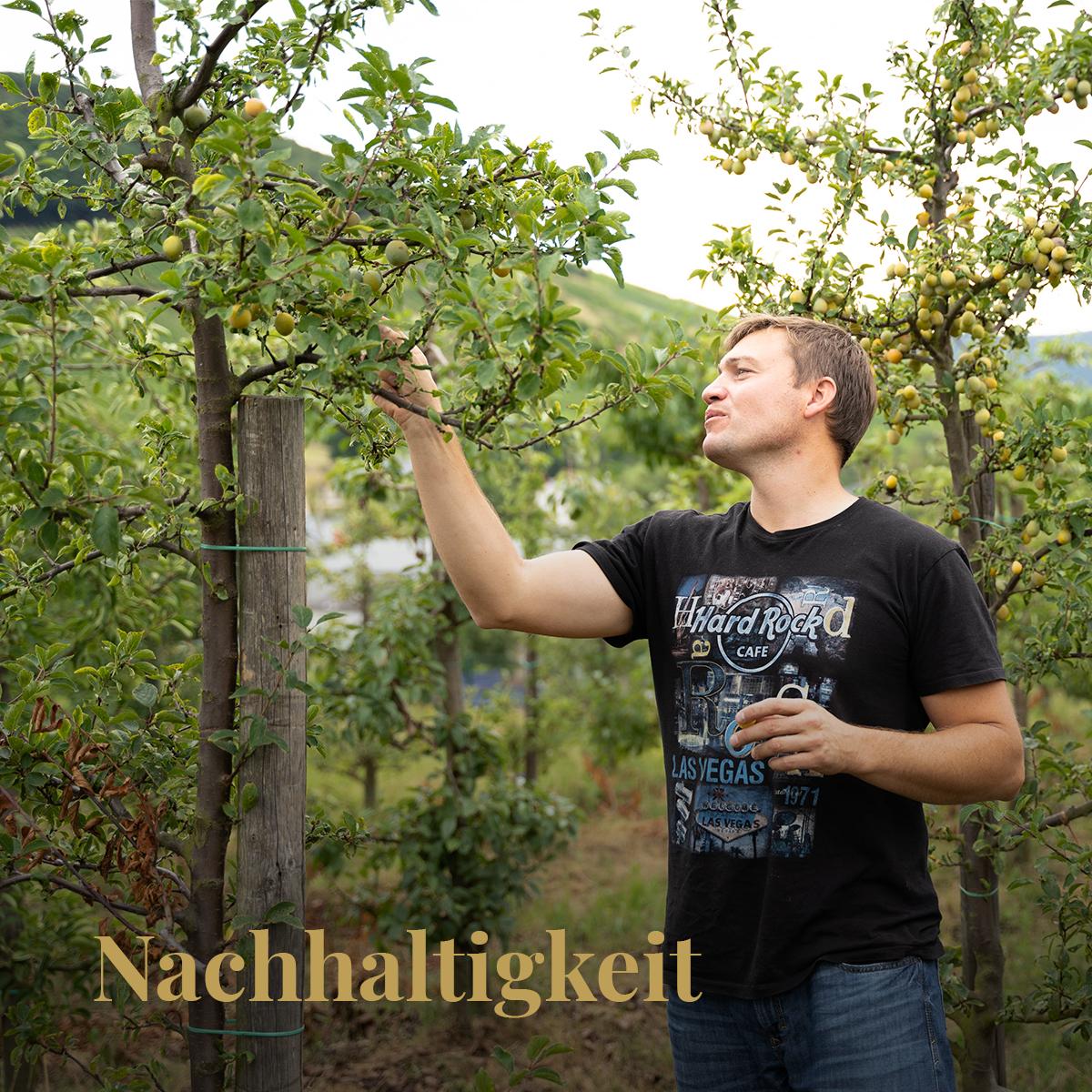 Nachhaltigkeit - Weingut Hubertushof Lieser
